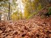 006-jesien-w-lesie