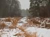 005-kampinoski-park-narodowy-zdjecia