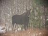 008-kampinoski-park-narodowy-zwierzeta