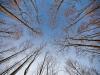 015-kampinoski-park-narodowy-zima