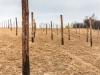13-plantacja-w-okolicy-szczebrzeszyna