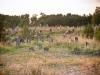011-jewish-cemetery-zarki