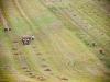 013-pole-rolnik-krowy