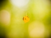 001-zolty-jesienny-lisc