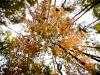 005-jesien-w-lesie